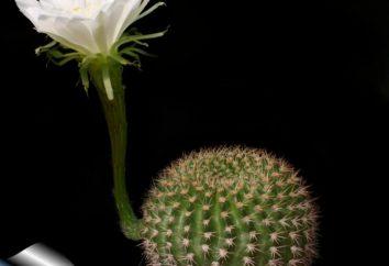 Las suculentas – es una planta? Animales suculentas