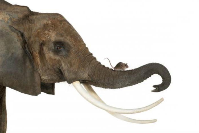 """Résultat de recherche d'images pour """"Un éléphant et une souris"""""""