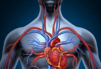 Żyły w klatce piersiowej: co zrobić, jeśli są one bardzo widoczne