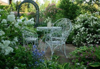 Arbusti da fiore per il giardino: lo scenario per il comfort