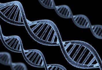 Ekspresja genów – co to jest? definicja