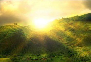 sources de lumière naturelle et artificielle: exemples. L'utilisation de sources de lumière artificielle. Types de sources de lumière artificielle