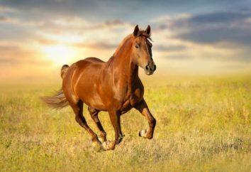 """""""Koń w midstream nie"""": znaczenie wyrażeń i przykłady użycia"""