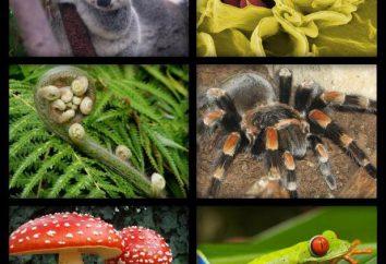 La diversidad de los seres vivos. Los niveles de la organización y las propiedades básicas