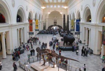 szkielety dinozaurów. Muzeum ze szkieletami dinozaurów
