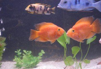 loros pescado increíble