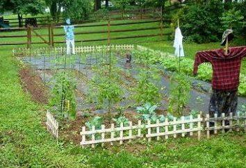 La rotazione delle colture al loro cottage estivo – la cooperazione tra i giardinieri e del suolo
