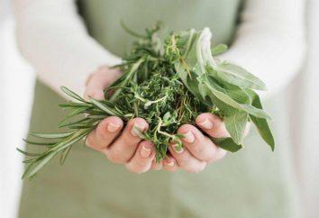 tè Monastic dai parassiti: la composizione di erbe, prescrizione, caratteristiche applicative e recensioni