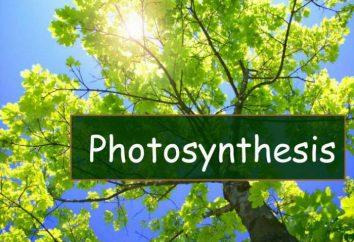Fotosintesi – che cos'è? fase della fotosintesi. Condizioni di fotosintesi