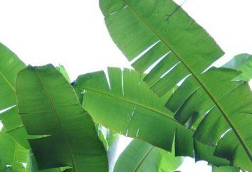 Modificación de las hojas de las plantas