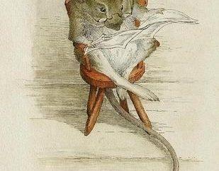 Anno del Ratto: quali anni sono caduti sotto la sua influenza