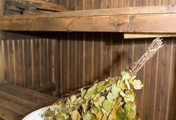 Al momento della raccolta scope di betulla e come farlo correttamente?