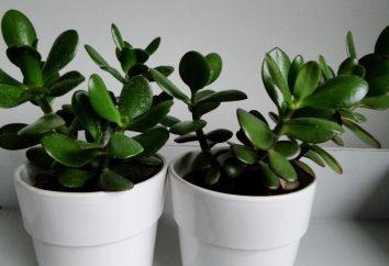 piante d'appartamento poco impegnativo: la selezione e la cura