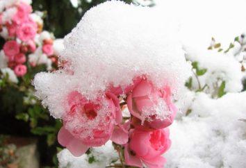Bei welcher Temperatur stieg auf Unterschlupf für den Winter: Tipps und Tricks