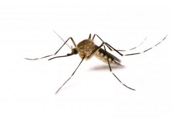 Fumigator – un nouveau remède contre les moustiques