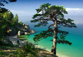 La flora e la fauna del lago Baikal