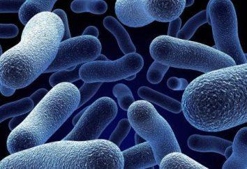 Co to jest eukaryote: definicja pojęcia, cechy struktury