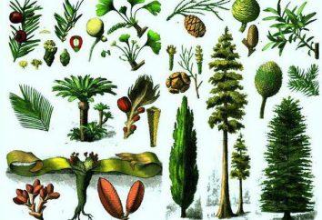 Pourquoi est-ce que l'on appelle gymnospermes: caractéristiques structurelles