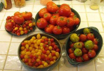 Ao plantar mudas de tomate em campo aberto