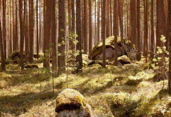 Parcs nationaux de la région de Leningrad. Zones spécialement protégées
