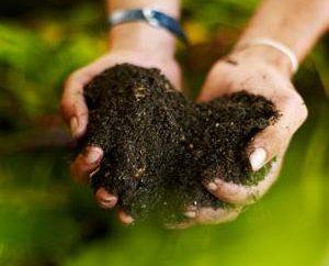 Substrat – ist die Grundlage des Lebens der Pflanze