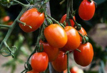Pomodoro Rio Grande: descrizione della varietà e crescente