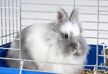 Przeszkolony królik: jak trenować gryzonia?
