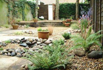 Diseñar una parcela de jardín: todo puede arreglar