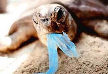 Esa tortuga de comer: en especial la alimentación
