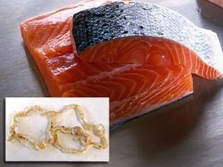 pesce Diphyllobothriasis. Diphyllobothriasis – che cosa è questa malattia?