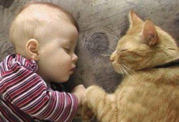 Jak robaki u kotów przenoszone na ludzi? Zapobieganie i leczenie infekcji robaków u kotów