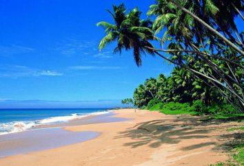 Hikkaduwa (Sri Lanka) – luksusowy ośrodek i raj dla nurków