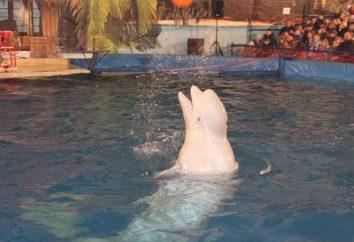 Rouler Dolphinarium à Ufa