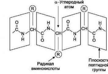 Dei residui di amminoacidi che sono costruiti molecola?