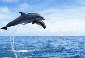 Dolphin Mer Noire. types de dauphins