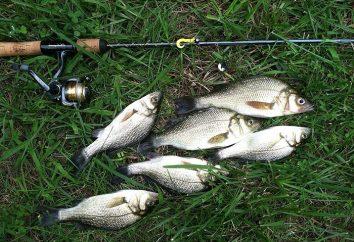La pesca en el pezón – un método para pescadores noveles