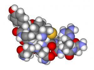 La función catalítica de las proteínas: ejemplos. Las principales funciones de las proteínas