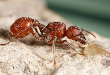 Co jeść owady owady? Jakie zwierzęta jedzą owady?