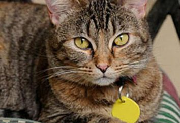 Zachowanie kotów po sterylizacji. Jak dbać o kota po sterylizacji