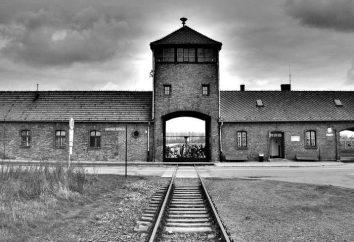 Dokumentalnych i fabularnych o Auschwitz