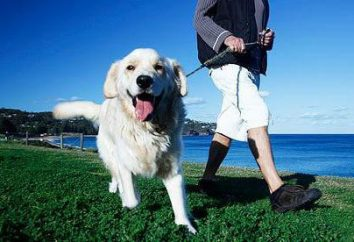 Shampooing et « barrière » gouttes pour les chiens – santé et beauté