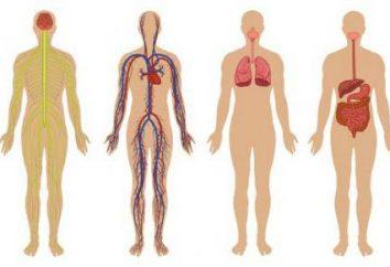 Sistema corporal, indispensable para la estructura del cuerpo de la persona