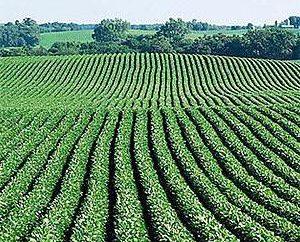 Terreni agricoli: in vendita, affitto, trasferimento ad abitazioni private, il costo delle tasse, ha permesso l'uso e la costruzione