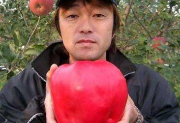 grande mela del mondo: su un ramo su un piedistallo