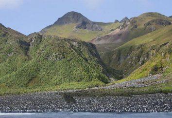 Características de la isla de Macquarie: ubicación geográfica, naturaleza y clima