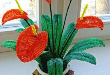 Bead anthurium Pletom: uno schema di fiori master class e reti