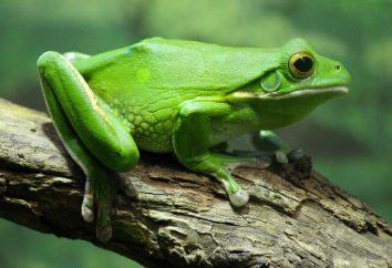 Żaba zjada co? Gatunki żab. Żaba w przyrodzie