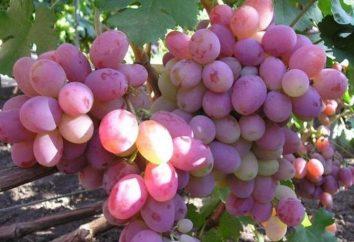 Winogrona pamięci Chirurg: opis odmiany, zwłaszcza uprawa i opinie