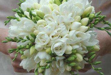 Wedding bouquet di fresie sottolineare la bellezza della sposa