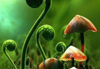 Perché lo studio delle piante è chiamata botanica? Botanica – lo studio delle piante